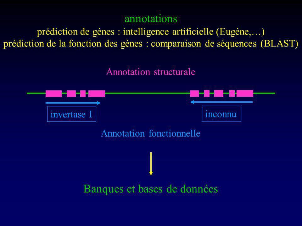 annotations prédiction de gènes : intelligence artificielle (Eugène,…) prédiction de la fonction des gènes : comparaison de séquences (BLAST) Annotation structurale invertase I inconnu Annotation fonctionnelle Banques et bases de données