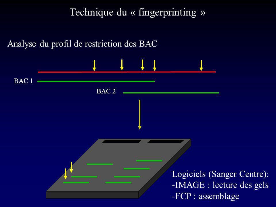 BAC 1 BAC 2 Logiciels (Sanger Centre): -IMAGE : lecture des gels -FCP : assemblage Technique du « fingerprinting » Analyse du profil de restriction des BAC