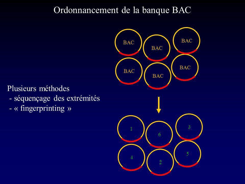 BAC 1 2 4 6 5 3 Ordonnancement de la banque BAC Plusieurs méthodes - séquençage des extrémités - « fingerprinting »