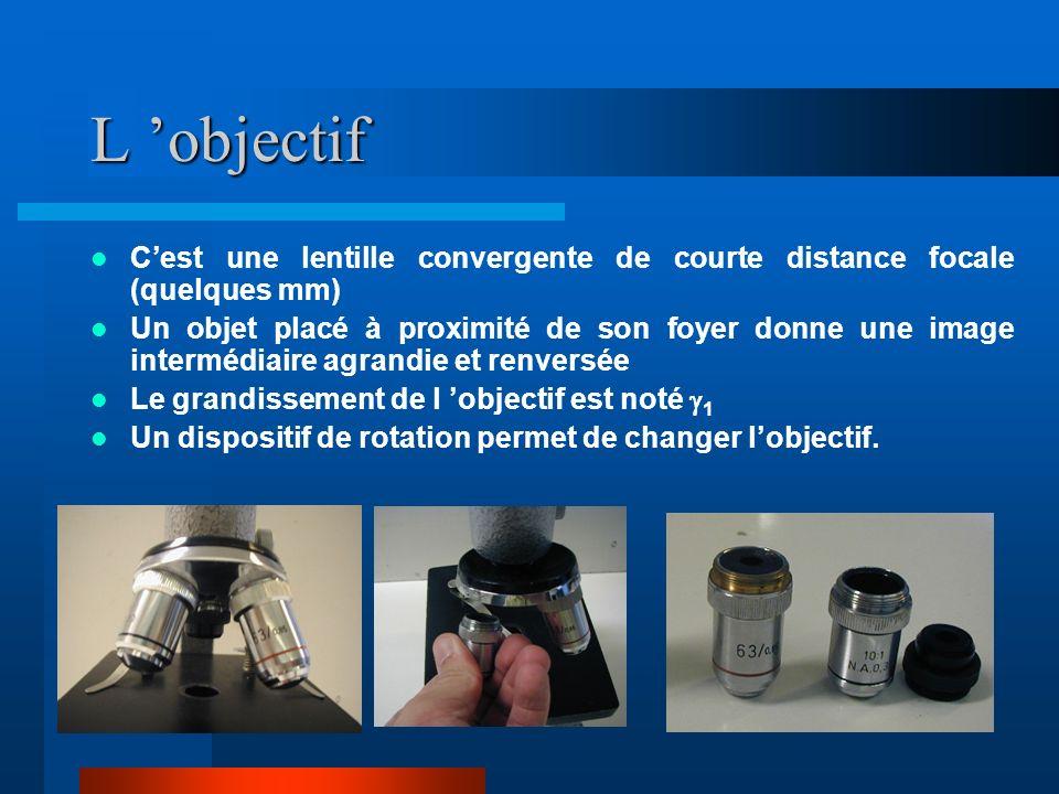 L oculaire C est une lentille convergente de plus grande distance focale (quelques cm) Il sert de loupe en grossissant limage intermédiaire donnée par l objectif Le grossissement de lobjectif est noté G 2