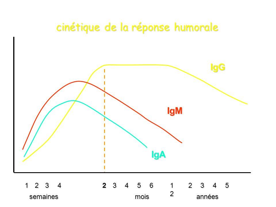 23456 1212121223451243 semainesmoisannées IgG IgM IgA cinétique de la réponse humorale