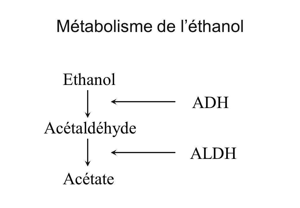 Métabolisme de léthanol Ethanol Acétaldéhyde Acétate ADH ALDH