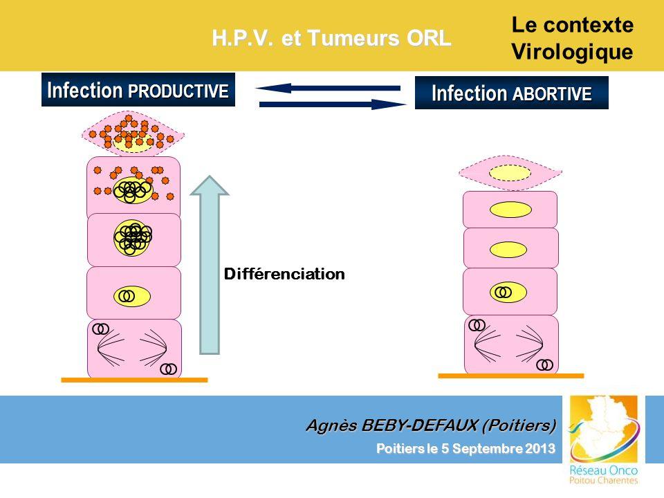 Agnès BEBY-DEFAUX (Poitiers) Le contexte Virologique Poitiers le 5 Septembre 2013 H.P.V. et Tumeurs ORL Infection ABORTIVE Infection PRODUCTIVE Différ