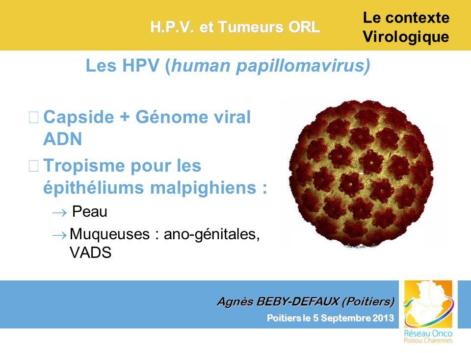 Agnès BEBY-DEFAUX (Poitiers) Le contexte Virologique Poitiers le 5 Septembre 2013 H.P.V. et Tumeurs ORL –Capside + Génome viral ADN –Tropisme pour les