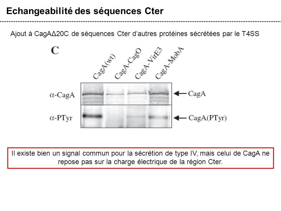 Echangeabilité des séquences Cter Ajout à CagAΔ20C de séquences Cter dautres protéines sécrétées par le T4SS Il existe bien un signal commun pour la s
