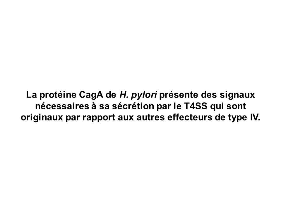 La protéine CagA de H. pylori présente des signaux nécessaires à sa sécrétion par le T4SS qui sont originaux par rapport aux autres effecteurs de type