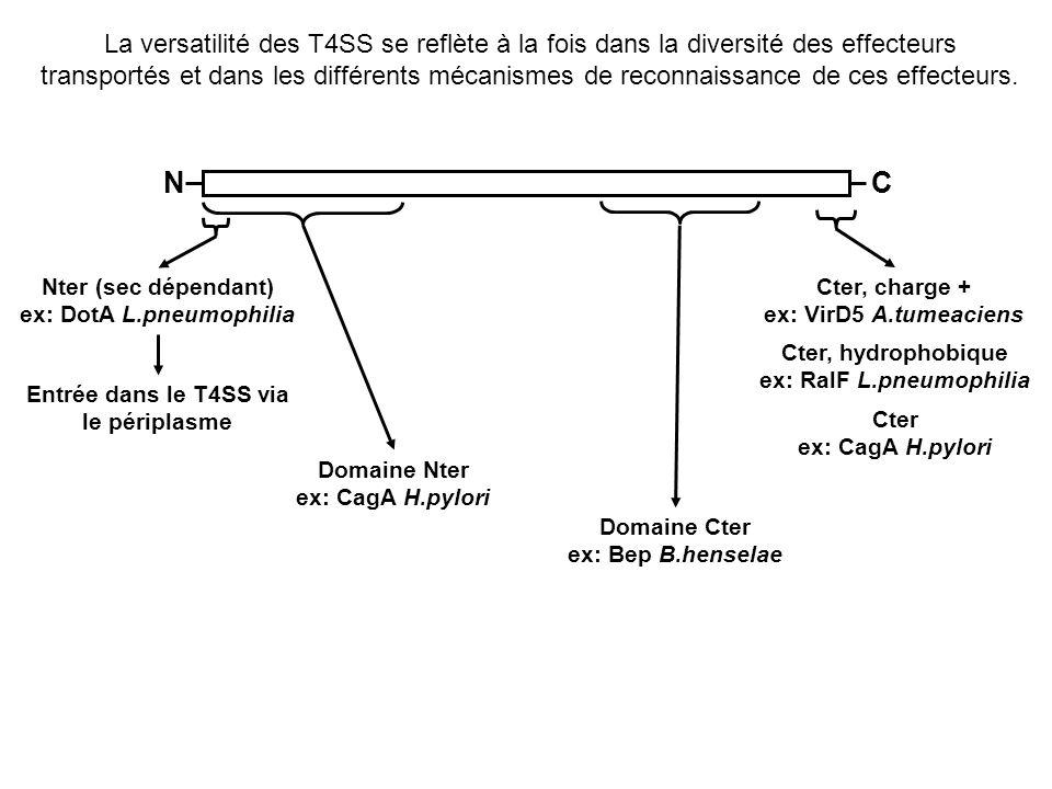 La versatilité des T4SS se reflète à la fois dans la diversité des effecteurs transportés et dans les différents mécanismes de reconnaissance de ces e