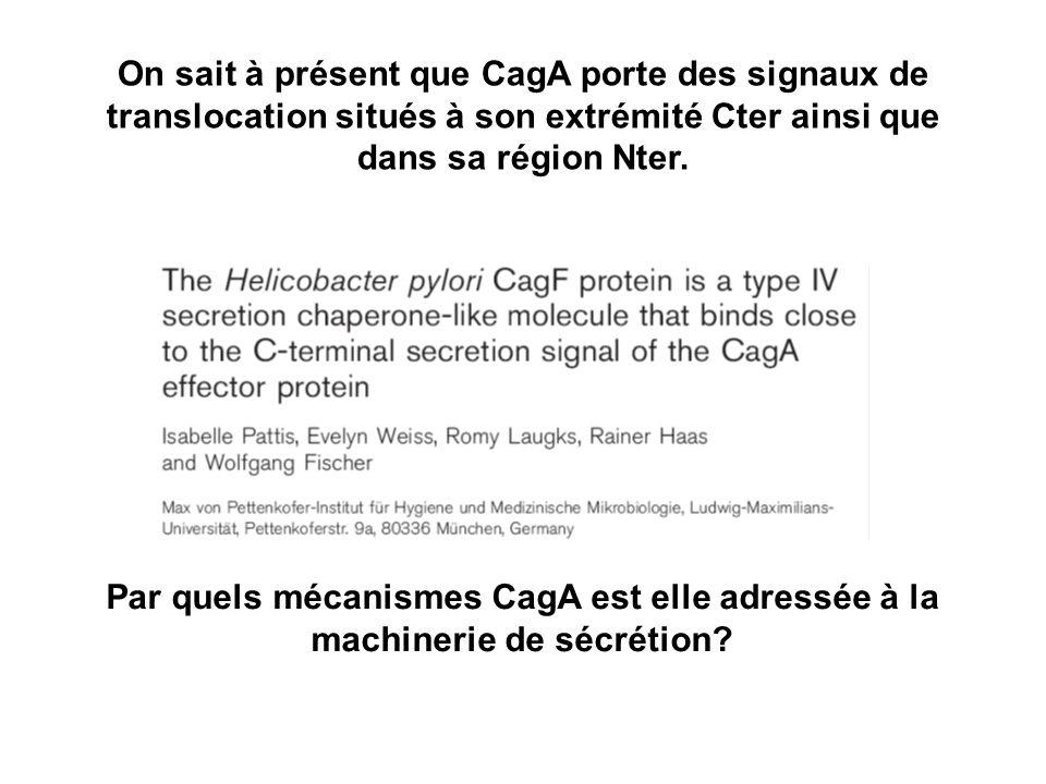 On sait à présent que CagA porte des signaux de translocation situés à son extrémité Cter ainsi que dans sa région Nter. Par quels mécanismes CagA est