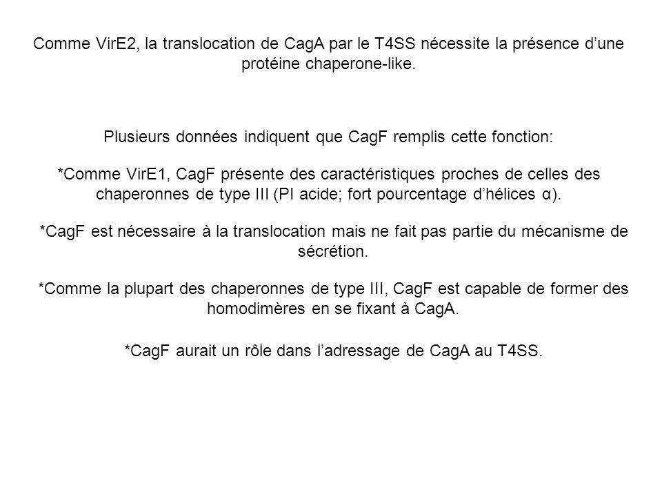 Comme VirE2, la translocation de CagA par le T4SS nécessite la présence dune protéine chaperone-like. Plusieurs données indiquent que CagF remplis cet