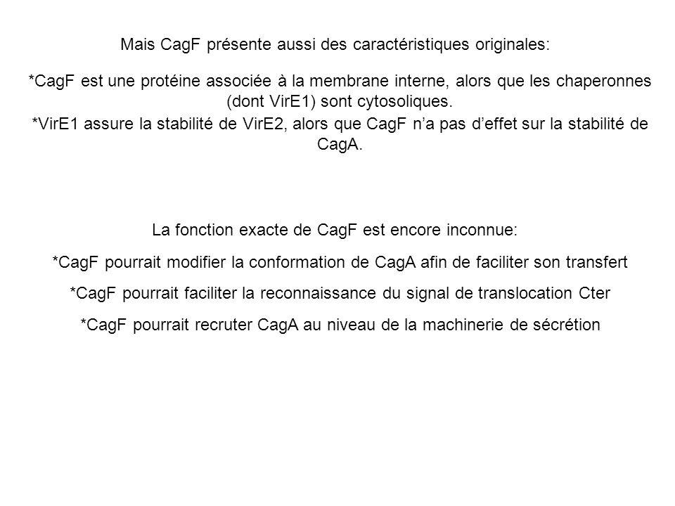 Mais CagF présente aussi des caractéristiques originales: *CagF est une protéine associée à la membrane interne, alors que les chaperonnes (dont VirE1