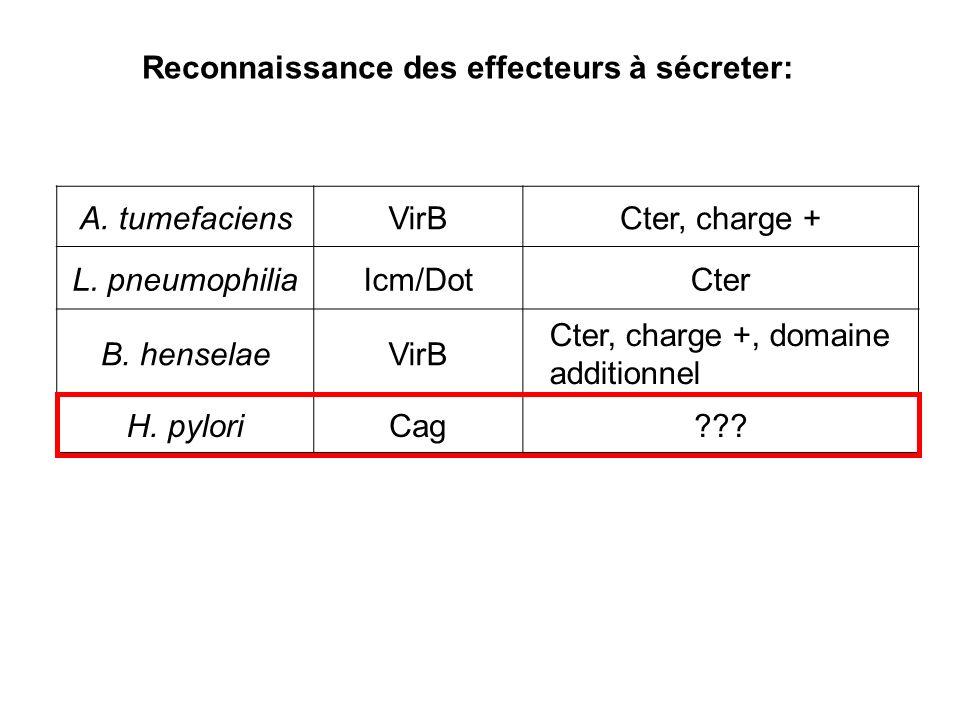 Reconnaissance des effecteurs à sécreter: A. tumefaciensVirBCter, charge + L. pneumophiliaIcm/DotCter B. henselaeVirB Cter, charge +, domaine addition