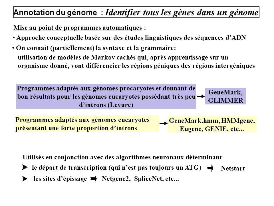 Mise au point de programmes automatiques : Approche conceptuelle basée sur des études linguistiques des séquences dADN On connait (partiellement) la s