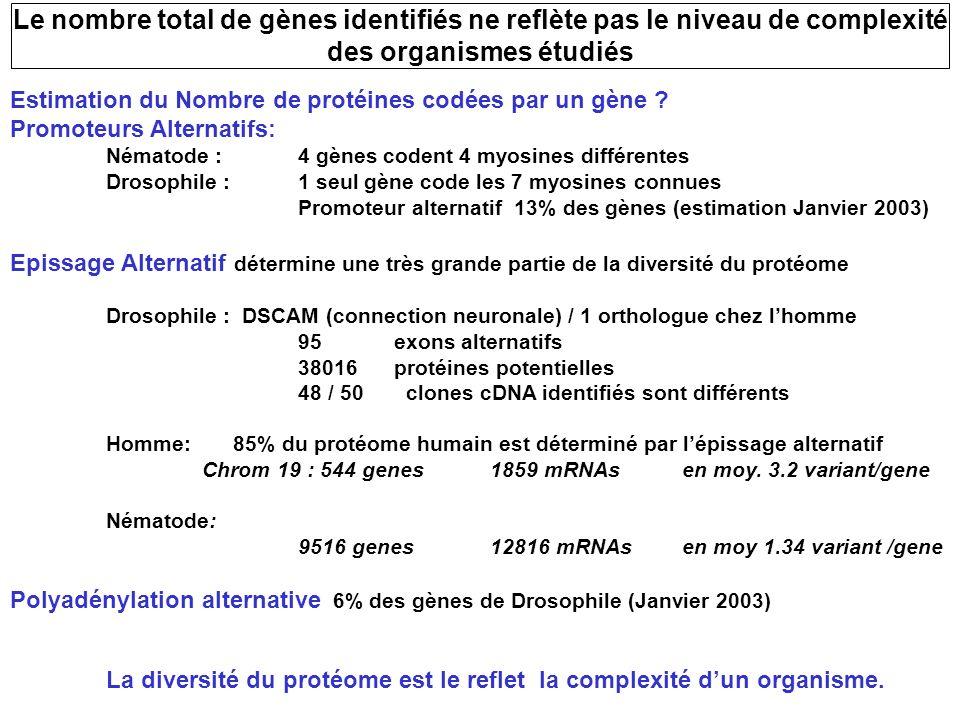 Estimation du Nombre de protéines codées par un gène ? Promoteurs Alternatifs: Nématode :4 gènes codent 4 myosines différentes Drosophile :1 seul gène