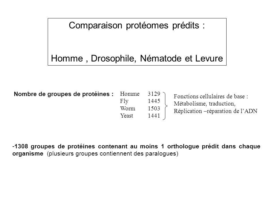 Comparaison protéomes prédits : Homme, Drosophile, Nématode et Levure Homme3129 Fly1445 Worm 1503 Yeast 1441 Fonctions cellulaires de base : Métabolis