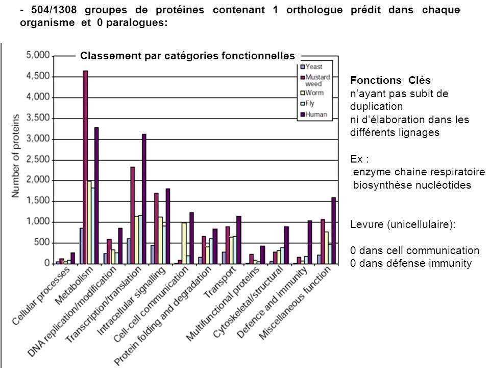 - 504/1308 groupes de protéines contenant 1 orthologue prédit dans chaque organisme et 0 paralogues: Fonctions Clés nayant pas subit de duplication ni