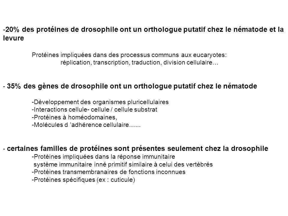 -20% des protéines de drosophile ont un orthologue putatif chez le nématode et la levure Protéines impliquées dans des processus communs aux eucaryote