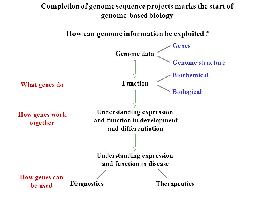 Completion of genome sequence projects marks the start of genome-based biology How can genome information be exploited ? Genome data Function What gen