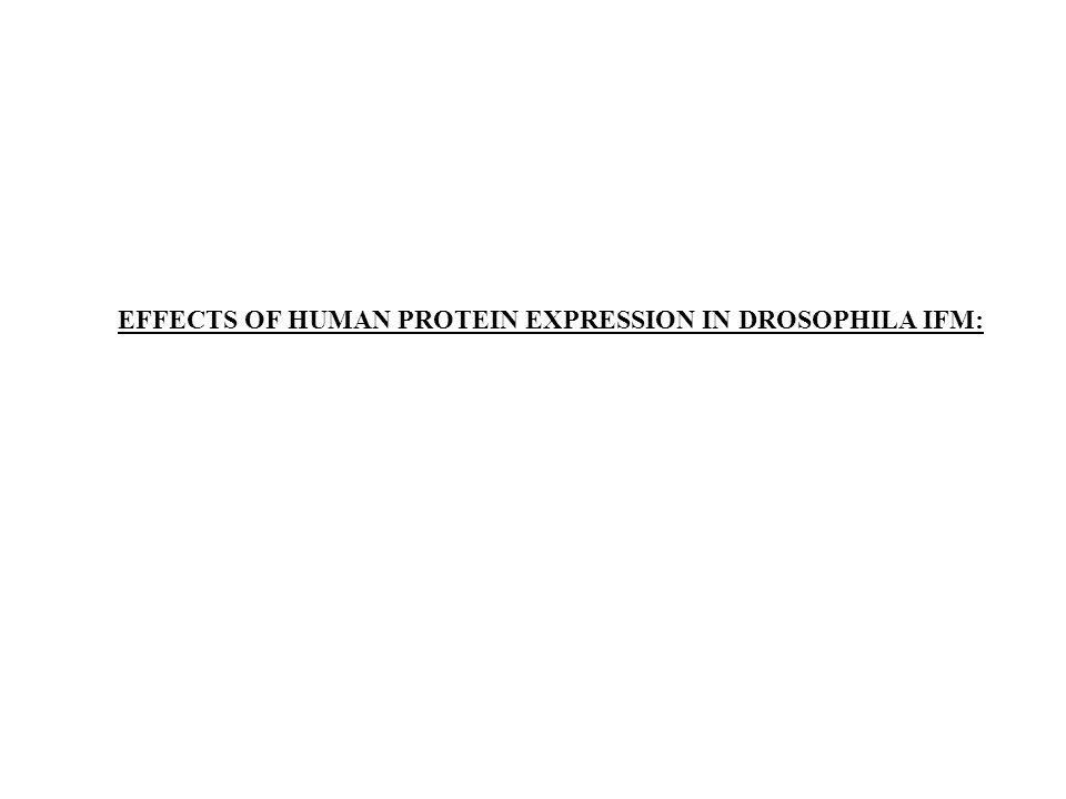 EFFECTS OF HUMAN PROTEIN EXPRESSION IN DROSOPHILA IFM: