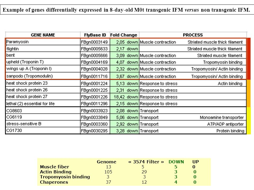 Example of genes differentially expressed in 8-day-old M0t transgenic IFM versus non transgenic IFM. Genome « 3574 Filter » DOWN UP Muscle fiber 135 5