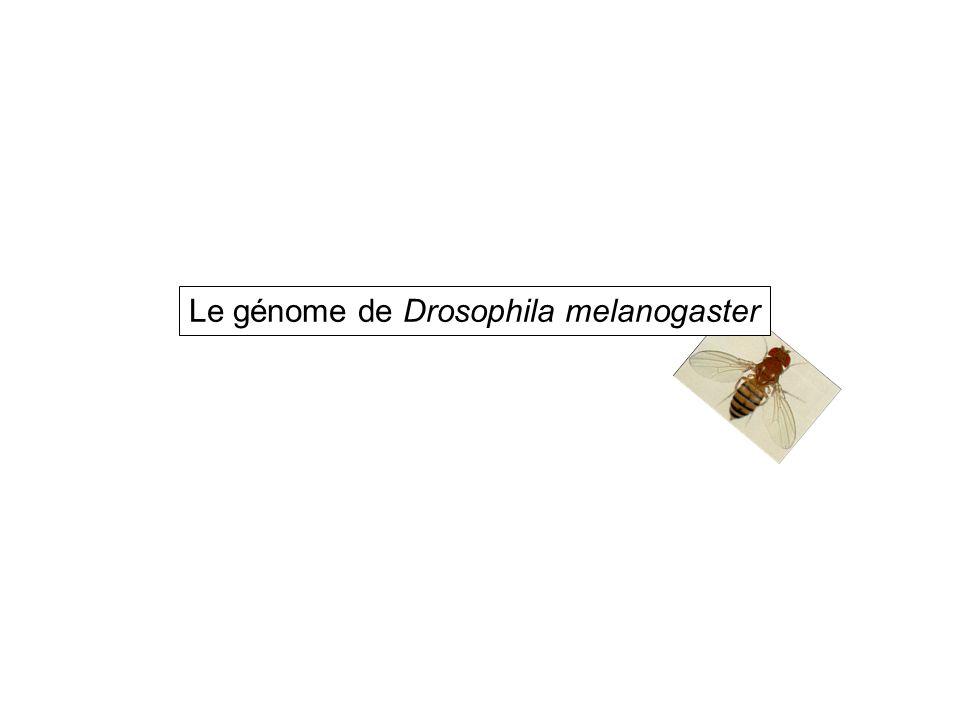 4 Chromosomes 180Mb dont 120Mb d euchromatine