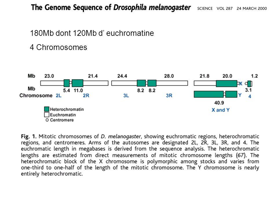 Comparaison protéomes prédits : Drosophile, Nématode et Levure Core protéome : Drosophile 8065, Nématode: 9453, Levure 4383 Comparaison par alignement de séquences: BLAST P et alignement dau moins 80% de la longueur de la protéine de drosophile avec une autre séquence >>>sous estimation !!!