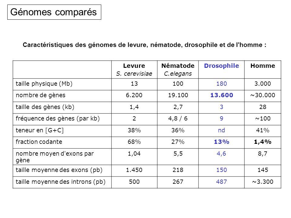 Levure S. cerevisiae Nématode C.elegans DrosophileHomme taille physique (Mb)131001803.000 nombre de gènes6.20019.10013.600~30.000 taille des gènes (kb