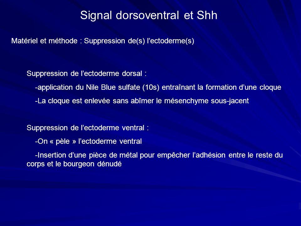 Matériel et méthode : Suppression de(s) lectoderme(s) Signal dorsoventral et Shh Suppression de lectoderme dorsal : -application du Nile Blue sulfate