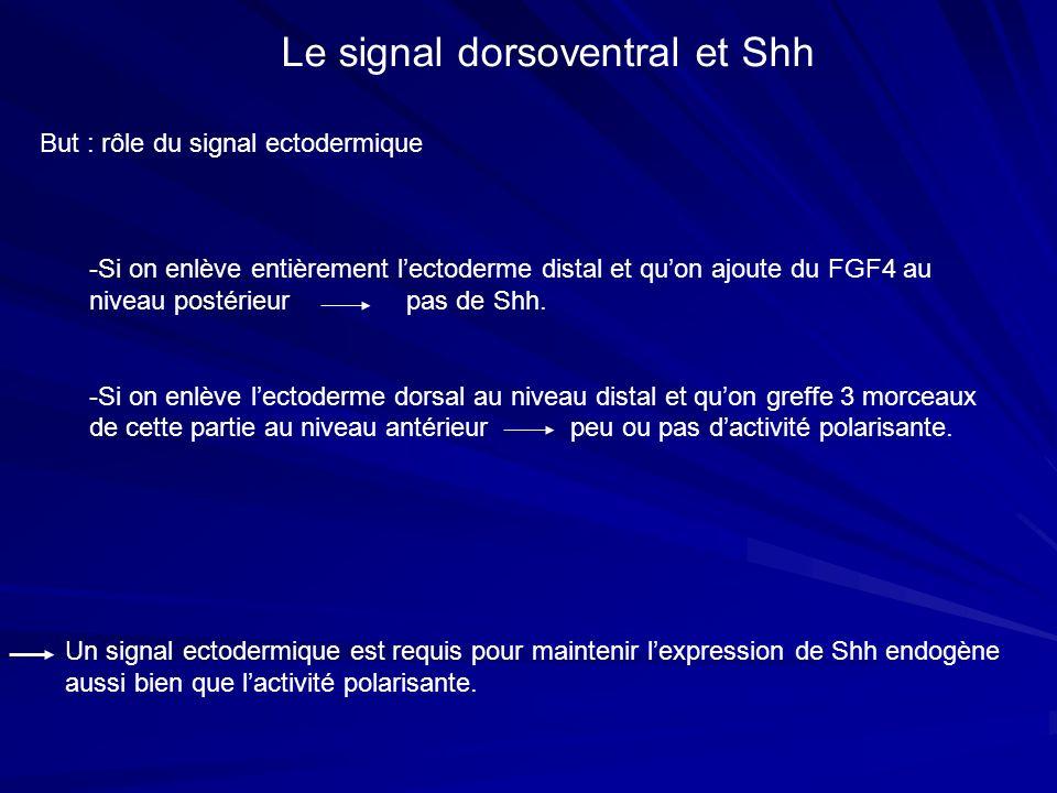 But : rôle du signal ectodermique Le signal dorsoventral et Shh -Si on enlève entièrement lectoderme distal et quon ajoute du FGF4 au niveau postérieu
