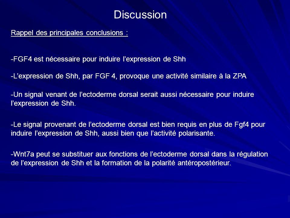 Rappel des principales conclusions : -FGF4 est nécessaire pour induire lexpression de Shh -Lexpression de Shh, par FGF 4, provoque une activité simila