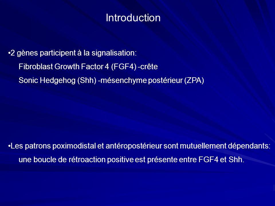 Introduction 2 gènes participent à la signalisation: Fibroblast Growth Factor 4 (FGF4) -crête Sonic Hedgehog (Shh) -mésenchyme postérieur (ZPA) Les pa