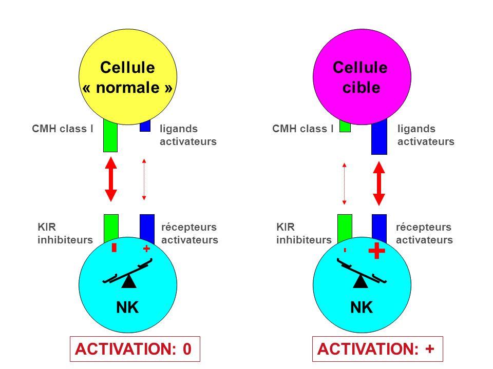 RécepteursInvariant dans le génomeCodés en segments géniques Pas de Réarrangement Réarrangements nécessaires DistributionNon-clonaleClonale ReconnaissanceMolécules conservées Détails de structures moléculaires -> Epitope Discrimination Soi-Non soiSélectionnée par lévolutionSelectionné dans lescellules somatiiques Action Activation Immédiate des effecteursActivation retardée des effecteurs RéponseMolecules de Co-stimulation Expansion Clonale ou Anergie Cytokines (IL-1, IL-6) IL-2 Chémokines (IL-8) Cytokines (IL-4, IFN ) Propriétés des récepteurs de lImmunité Innée et Adaptive