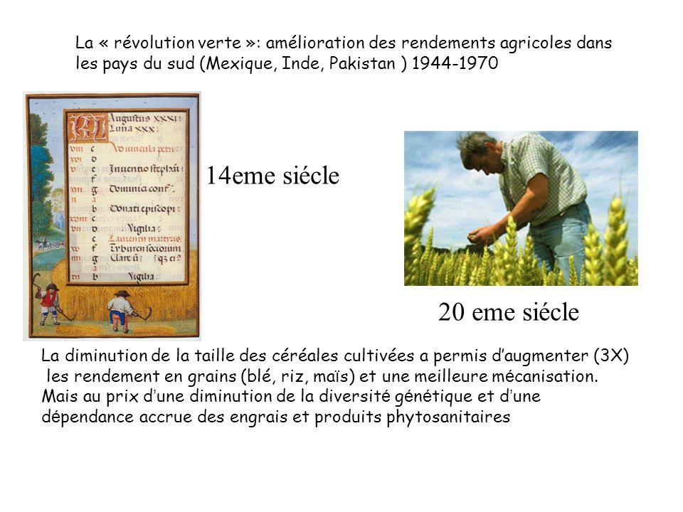 La diminution de la taille des céréales cultivées a permis daugmenter (3X) les rendement en grains (blé, riz, ma ï s) et une meilleure m é canisation.