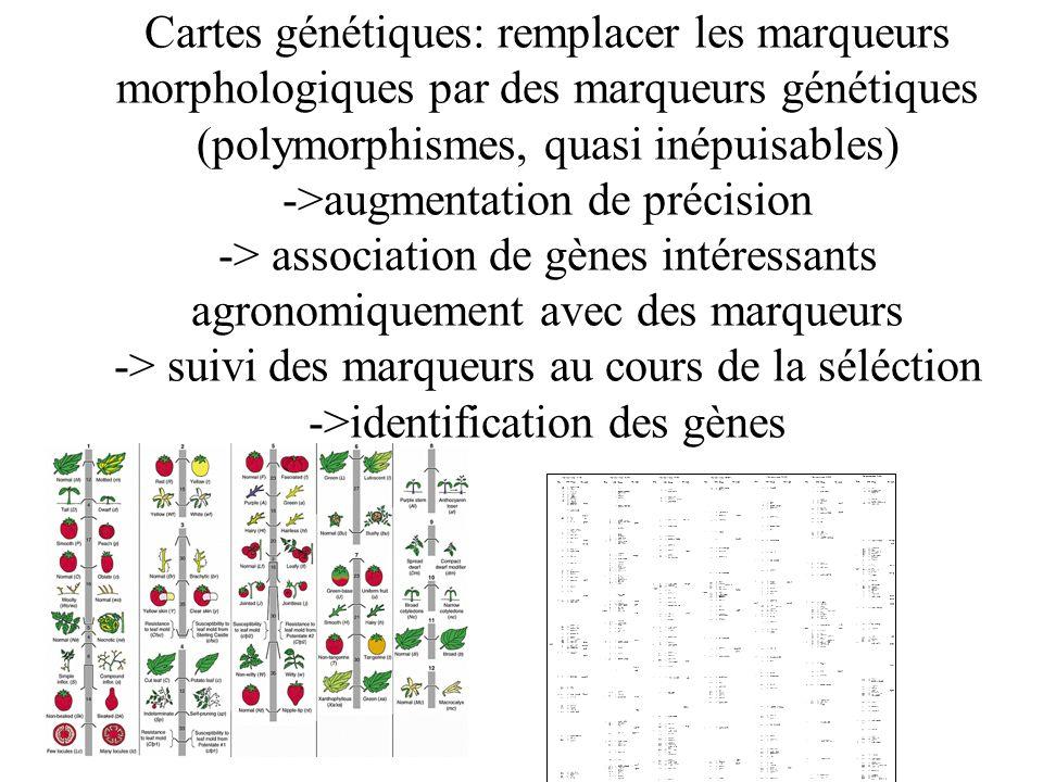 Cartes génétiques: remplacer les marqueurs morphologiques par des marqueurs génétiques (polymorphismes, quasi inépuisables) ->augmentation de précisio
