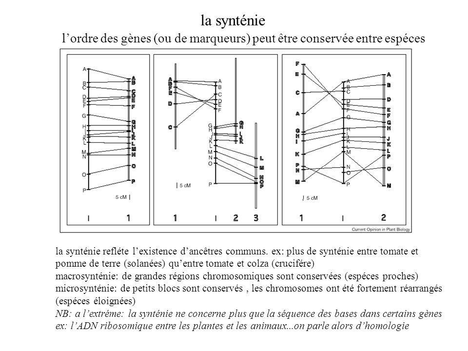 la synténie lordre des gènes (ou de marqueurs) peut être conservée entre espéces la synténie refléte lexistence dancêtres communs. ex: plus de synténi