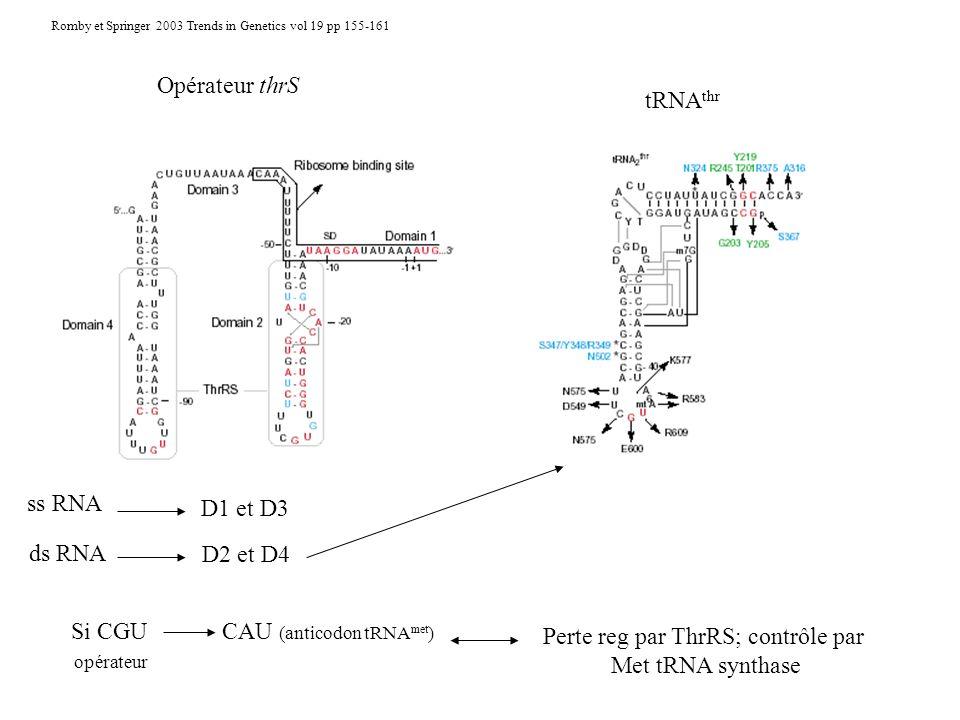 Opérateur thrS tRNA thr ss RNA D1 et D3 ds RNA D2 et D4 Si CGUCAU (anticodon tRNA met ) opérateur Perte reg par ThrRS; contrôle par Met tRNA synthase