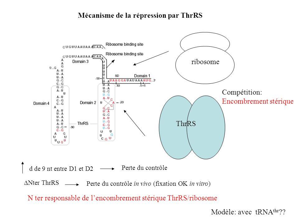 Mécanisme de la répression par ThrRS ThrRS ribosome Compétition: Encombrement stérique d de 9 nt entre D1 et D2 Perte du contrôle Nter ThrRS Perte du