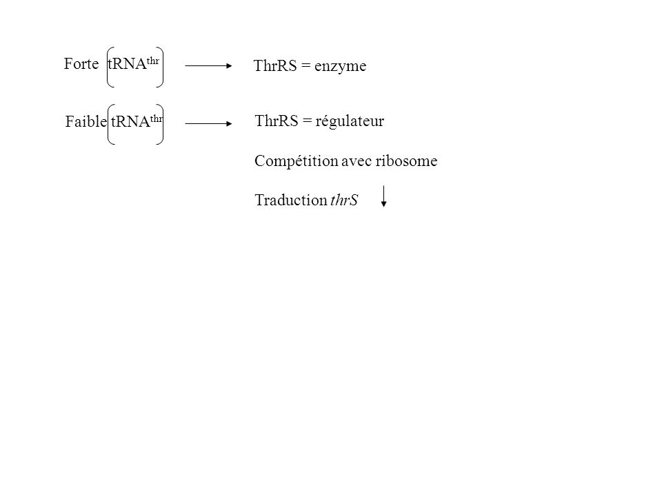 ThrRS = régulateur Compétition avec ribosome Traduction thrS ThrRS = enzyme Forte tRNA thr Faible tRNA thr