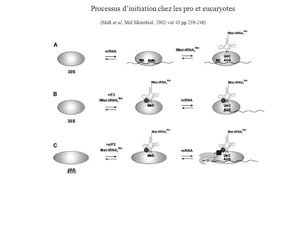 40S Processus dinitiation chez les pro et eucaryotes (Moll et al, Mol Microbiol. 2002 vol 43 pp 239-246)