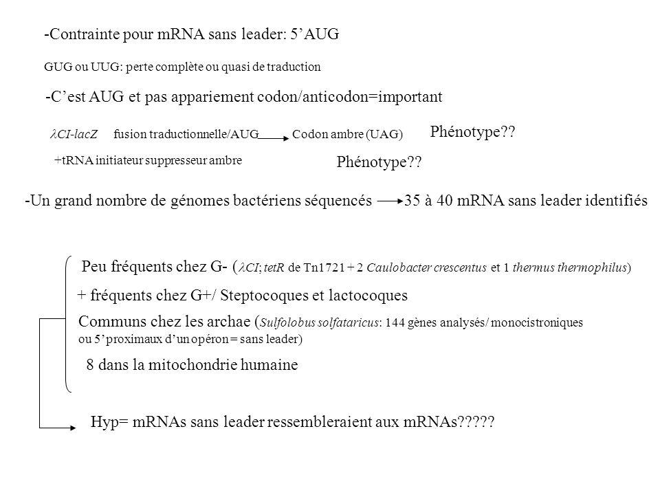-Contrainte pour mRNA sans leader: 5AUG GUG ou UUG: perte complète ou quasi de traduction -Cest AUG et pas appariement codon/anticodon=important CI-la