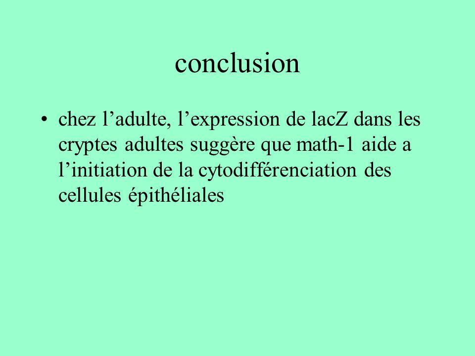 conclusion chez ladulte, lexpression de lacZ dans les cryptes adultes suggère que math-1 aide a linitiation de la cytodifférenciation des cellules épi