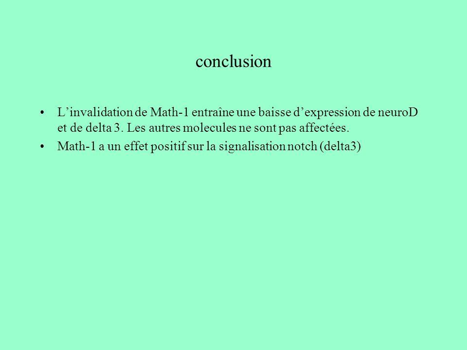 conclusion Linvalidation de Math-1 entraîne une baisse dexpression de neuroD et de delta 3. Les autres molecules ne sont pas affectées. Math-1 a un ef