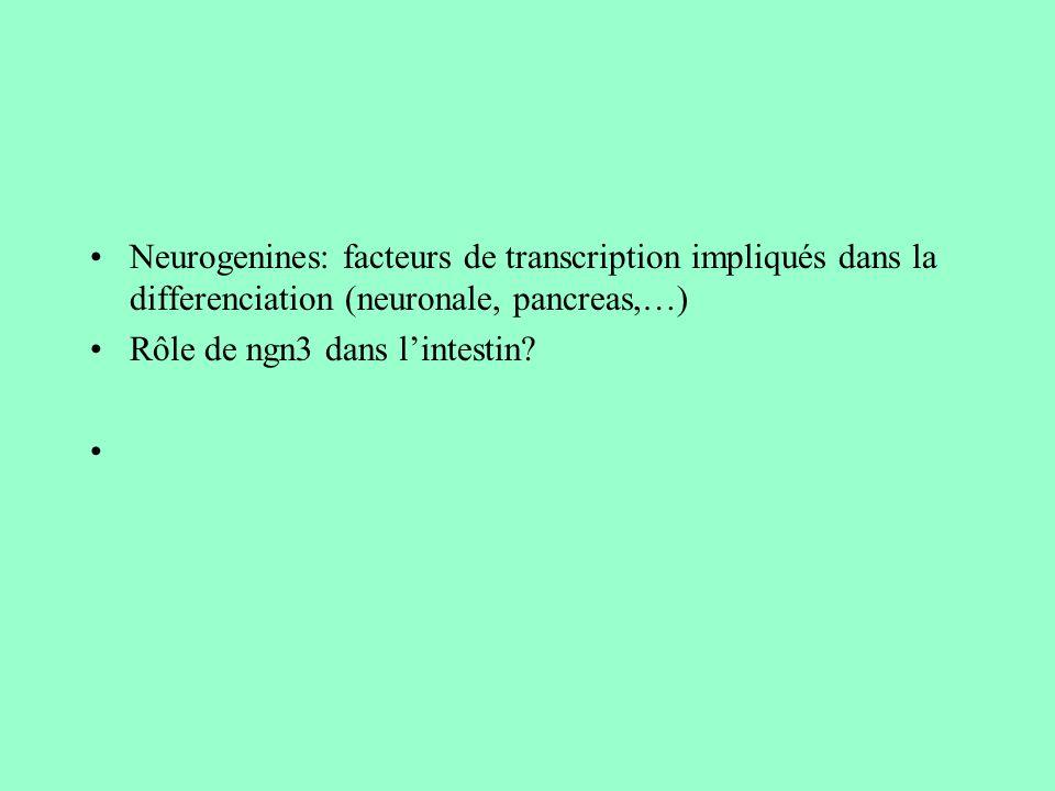Neurogenines: facteurs de transcription impliqués dans la differenciation (neuronale, pancreas,…) Rôle de ngn3 dans lintestin?