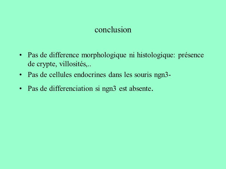 conclusion Pas de difference morphologique ni histologique: présence de crypte, villosités,.. Pas de cellules endocrines dans les souris ngn3- Pas de