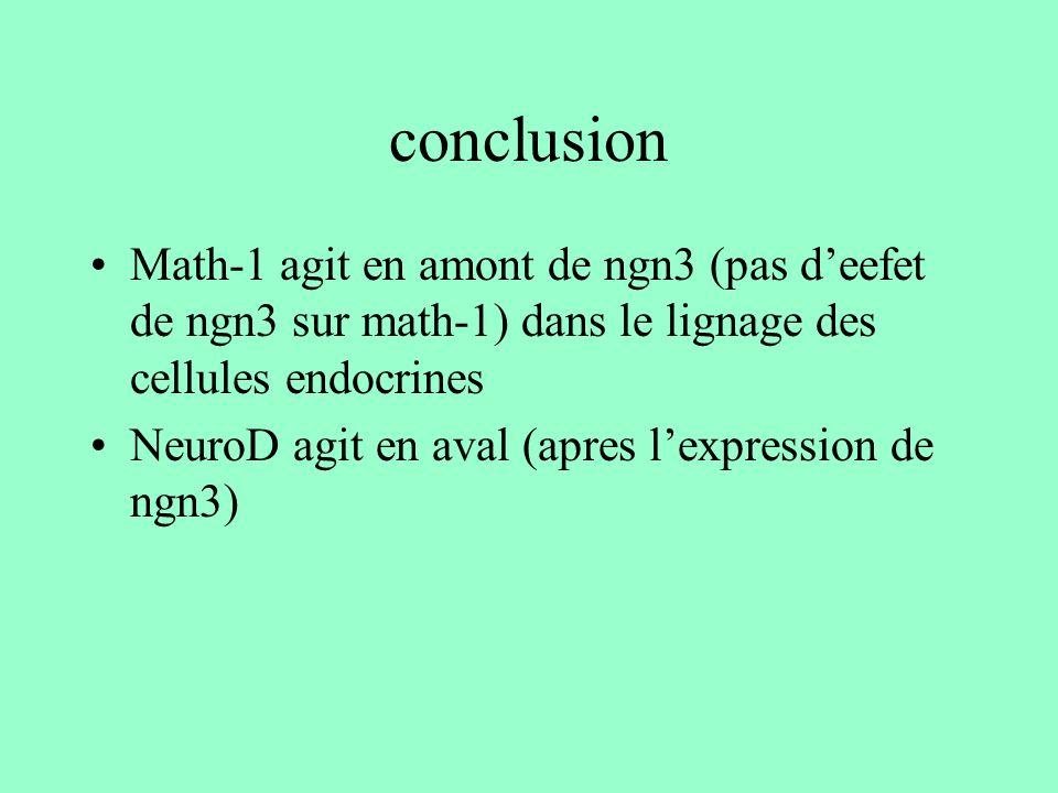 conclusion Math-1 agit en amont de ngn3 (pas deefet de ngn3 sur math-1) dans le lignage des cellules endocrines NeuroD agit en aval (apres lexpression