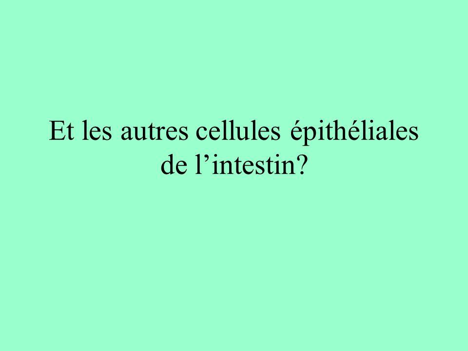 Et les autres cellules épithéliales de lintestin?