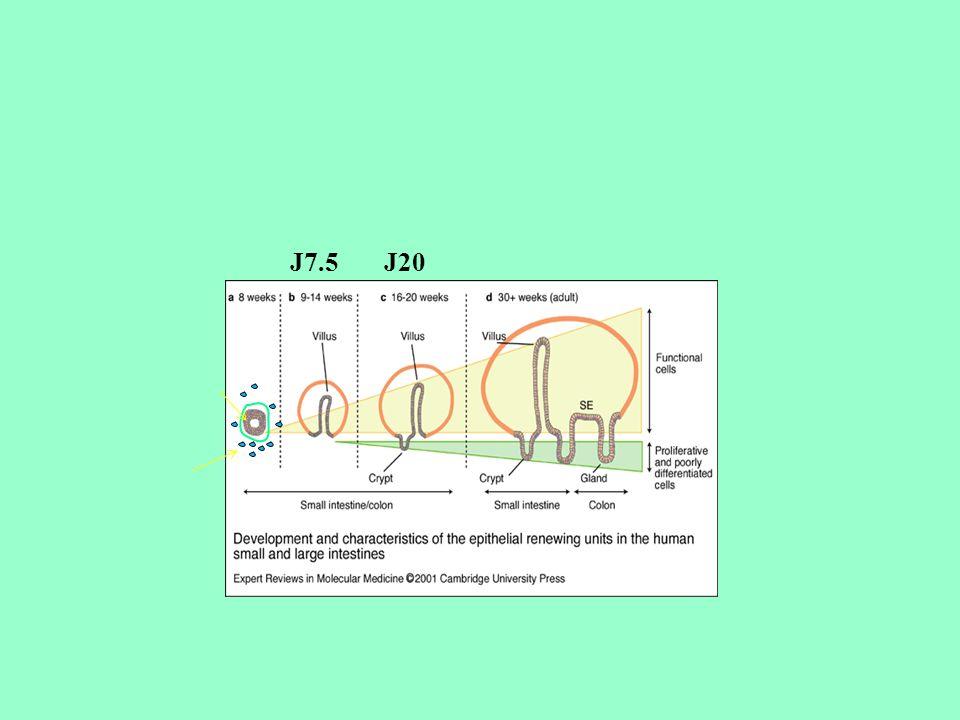 J7.5J20