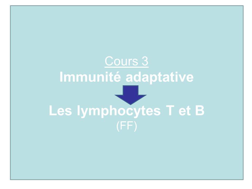 Cours 3 Immunité adaptative Les lymphocytes T et B (FF)