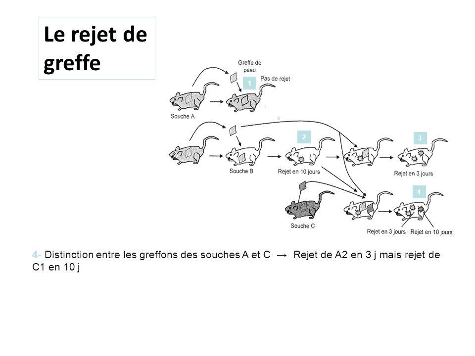 antiserum Rejet en 10 jours Le rejet de greffe 4- Distinction entre les greffons des souches A et C Rejet de A2 en 3 j mais rejet de C1 en 10 j 1 2 3