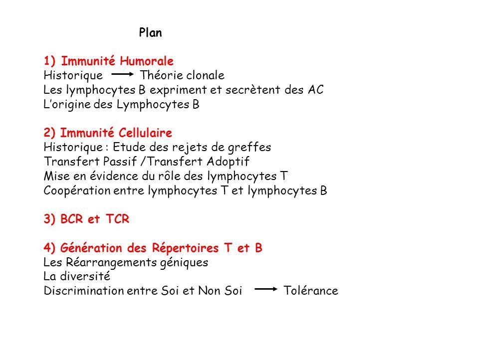 Plan 1)Immunité Humorale Historique Théorie clonale Les lymphocytes B expriment et secrètent des AC Lorigine des Lymphocytes B 2) Immunité Cellulaire