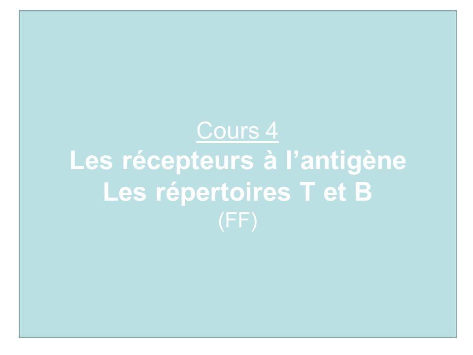 Cours 4 Les récepteurs à lantigène Les répertoires T et B (FF)